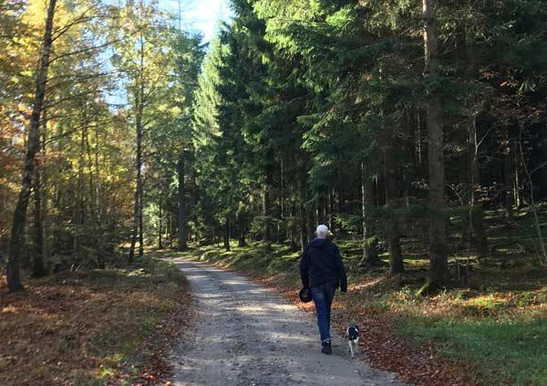 Vandretur nær Ry - Skoven ved Højris Bøge